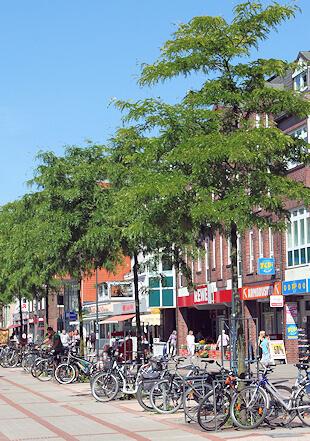 Schimmelbeseitigung in Rahlstedt