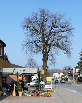 Malerarbeiten von Maler Boller auch in Wohltorf bei Aumühle