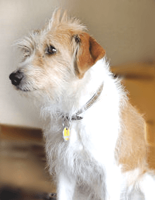 Gern gesehen: Haustiere freuen sich auf Maler Boller