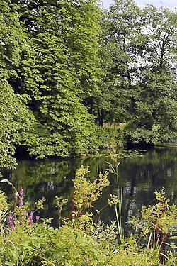 Hamburg Wohldorf-Ohlstedt - pure Natur